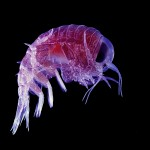 The citizen science of the deep ocean