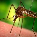 Using big data to fight malaria