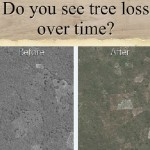 Tinder style app lets citizen scientists further understand deforestation