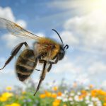 Researchers look to bees for help with the next generation of drones