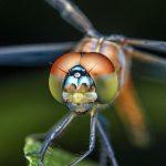 How dragonflies can help autonomous vehicles