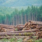 The role of digital technology in sustainable logging