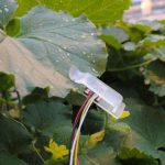 Farmers using leaf sensors to guide smart irrigation